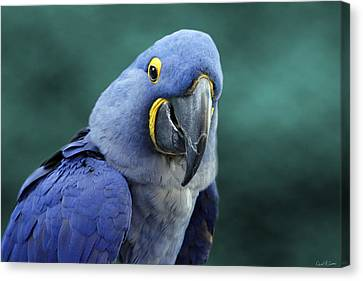 Happy Bird Canvas Print by David Simons