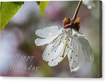 Happy Birthday Blossom Canvas Print