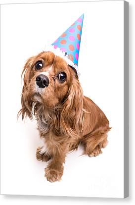 Happy Birthday Puppy Canvas Print