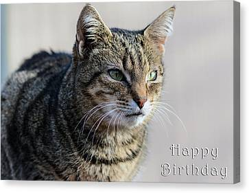 Happy Birthday Tabby Canvas Print