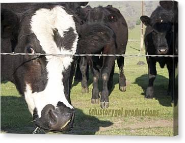 Canvas Print - Happy Bulls by Marsha Ingrao