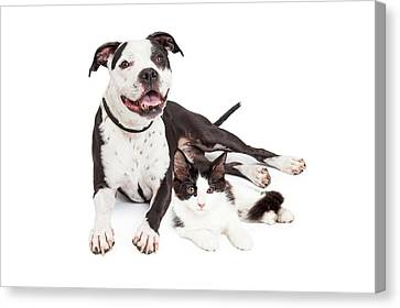 Happy Dog And Kitten Together Canvas Print by Susan Schmitz