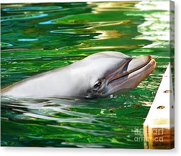 Happy Dolphin Canvas Print by Kristine Merc