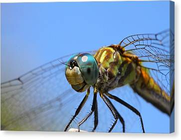 Happy Dragonfly Canvas Print