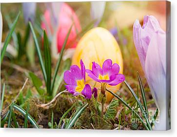 Canvas Print featuring the photograph Happy Easter by Christine Sponchia