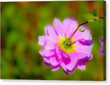 Pinks And Purple Petals Canvas Print - Happy Flower by Karol Livote