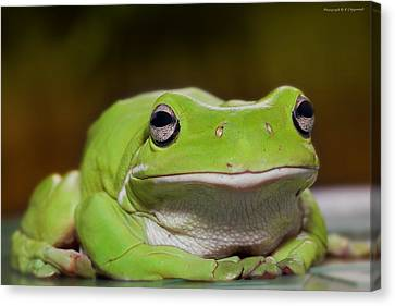 Happy Frog 0003 Canvas Print by Kevin Chippindall