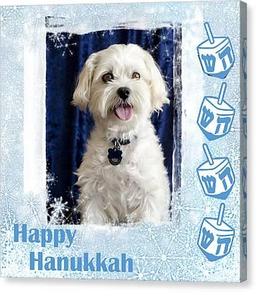 Happy Hanukkah Maltipoo Canvas Print by Harold Bonacquist