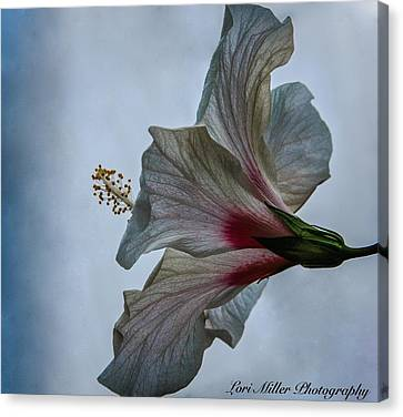 Happy Hibiscus At Biltmore Conservatory Canvas Print