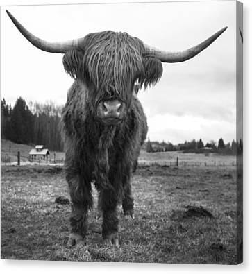 Happy Highland Cow Canvas Print by Sonya Lang