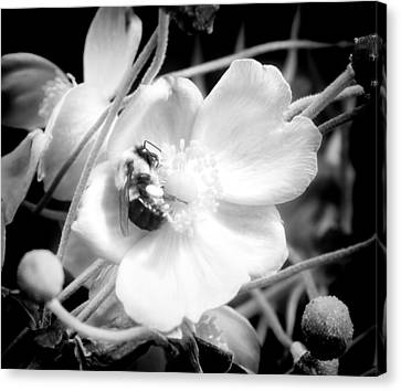 Happy Honeybee Canvas Print