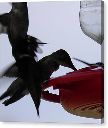 Canvas Print featuring the photograph Happy Hour by Nick Kirby
