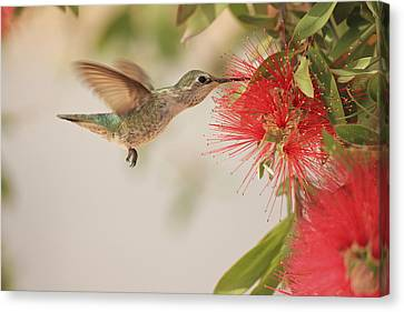 Happy Humming Canvas Print