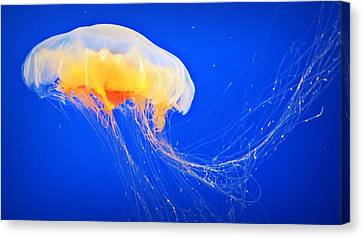 Canvas Print - Happy Jelly  by Lynsie Petig