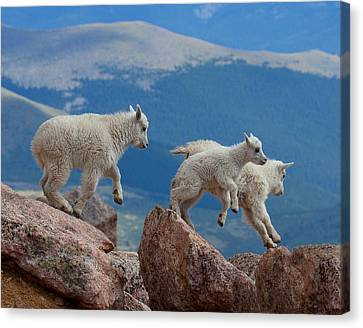 Happy Landing Canvas Print by Jim Garrison