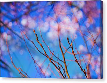 Happy New Year Canvas Print by Kunal Mehra