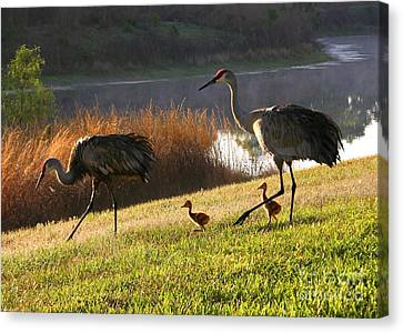 Happy Sandhill Crane Family Canvas Print