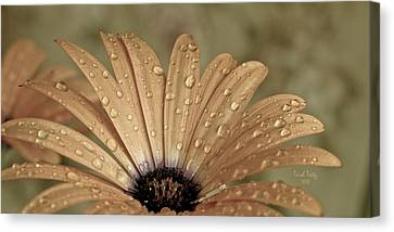 Happy To Be A Raindrop Canvas Print