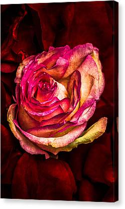 Happy Valentine's Day - 1 Canvas Print by Alexander Senin