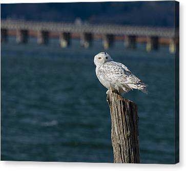 Harbor Sentry Canvas Print by Stephen Flint