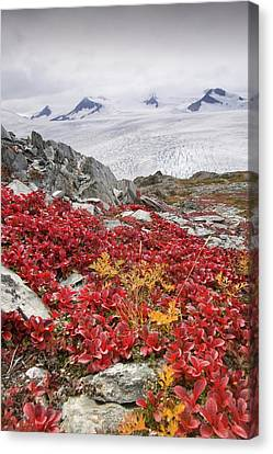 Harding Ice Field Canvas Print by Ashley Cooper