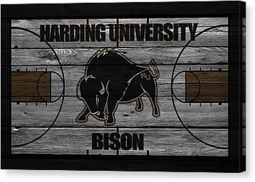 Harding University Bison Canvas Print by Joe Hamilton