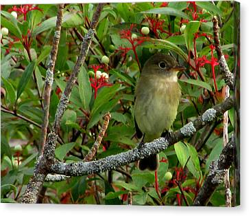 Canvas Print featuring the photograph Hardly The Least Least Flycatcher by Kimberly Mackowski