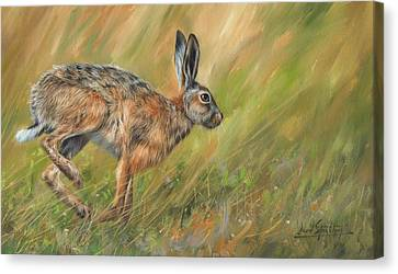 Hare Canvas Print by David Stribbling