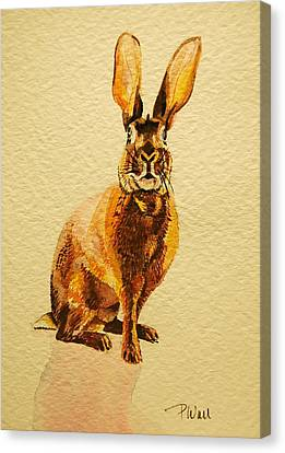 Hare Canvas Print by Pattie Wall