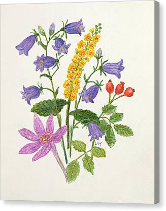 Harebells And Other Wild Flowers  Canvas Print by Ursula Hodgson