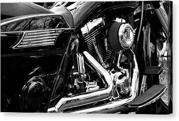 Harley Canvas Print by Michelle Calkins