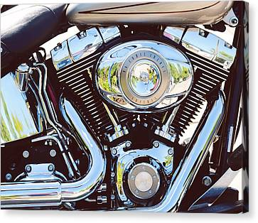 Harley Canvas Print by Tracy W