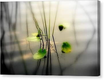 Water Lillies Canvas Print - Harmony Zen Photography II by Susanne Van Hulst