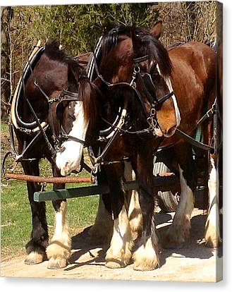 Harness Partners Canvas Print by Jeff Gater