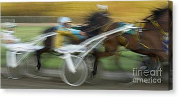Harness Racing 6 Canvas Print by Bob Christopher