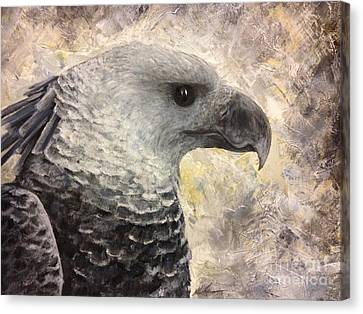 Harpy Eagle Study In Acrylic Canvas Print by K Simmons Luna