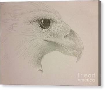 Harpy Eagle Study Canvas Print