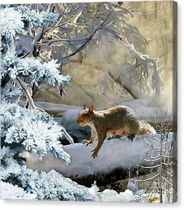 Harry In Winter Canvas Print