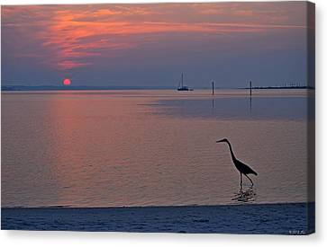 Canvas Print featuring the photograph Harry The Heron Fishing On Santa Rosa Sound At Sunrise by Jeff at JSJ Photography