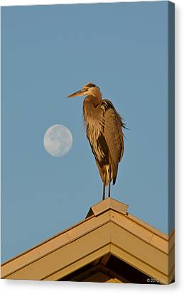 Canvas Print featuring the photograph Harry The Heron Ponders A Trip To The Full Moon by Jeff at JSJ Photography