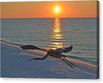 Canvas Print featuring the photograph Harry The Heron Takes Flight To Reposition His Guard Over Navarre Beach At Sunrise by Jeff at JSJ Photography