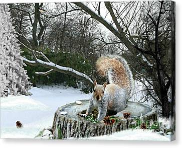 Harry The Squirrel Canvas Print by Morag Bates