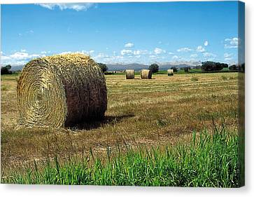 Crops Canvas Print - Harvest 3 by Terry Reynoldson
