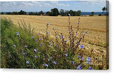 Harvest In Denmark Canvas Print by Susanne Baumann