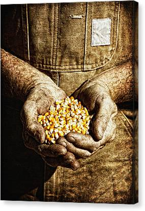 Harvest In His Hands Canvas Print by Lincoln Rogers