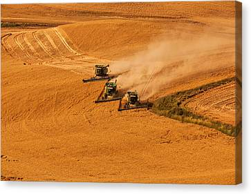 Harvest Canvas Print by Mary Jo Allen