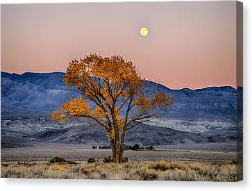 Harvest Moon Canvas Print by Cat Connor