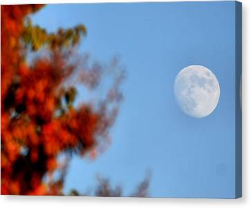 Harvest Moon Canvas Print by Karen Scovill