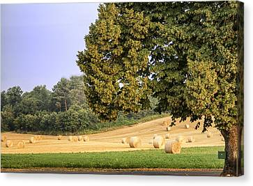Harvest Morning Canvas Print