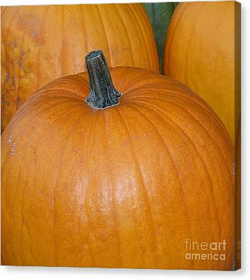 Harvest Pumpkins Canvas Print by Chalet Roome-Rigdon